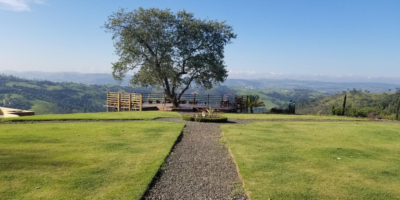 vinícola terrassos