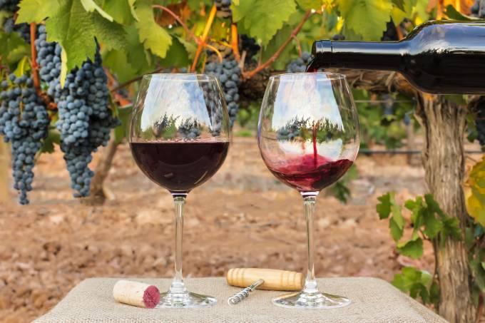Vinhos de Bordeaux terão safra excelente após verão seco