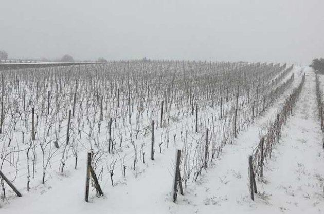 Neve pode trazer vantagens aos vinhedos