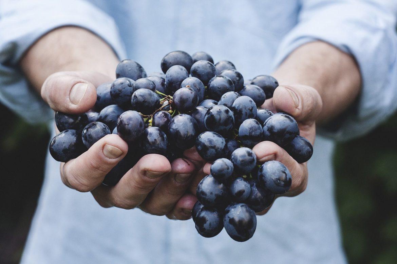 Cientistas franceses criam superuvas que não requerem pesticidas
