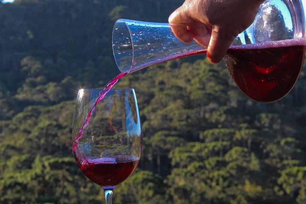 Turista poder colher uvas e degustar vinhos em vinícola brasileira