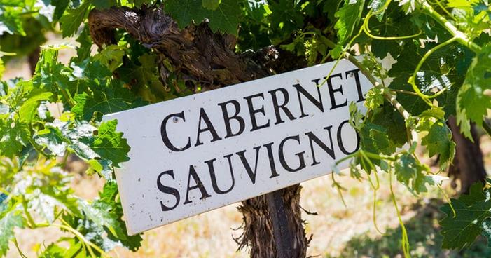 Conheça a uva: Cabernet Sauvignon