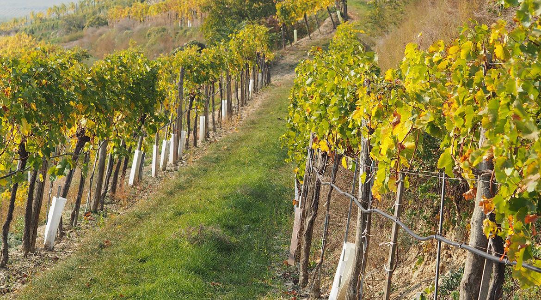 Vinhos orgânicos, biodinâmicos e naturais: saiba a diferença