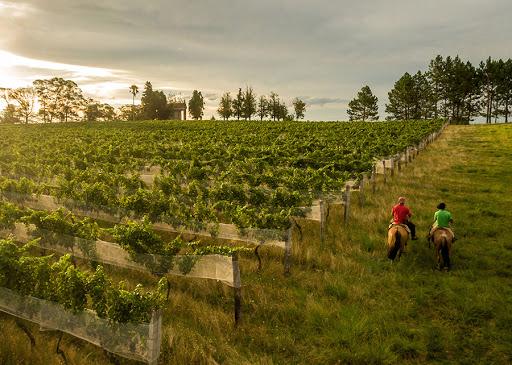 Vinhos da Campanha Gaúcha ganham indicação geográfica