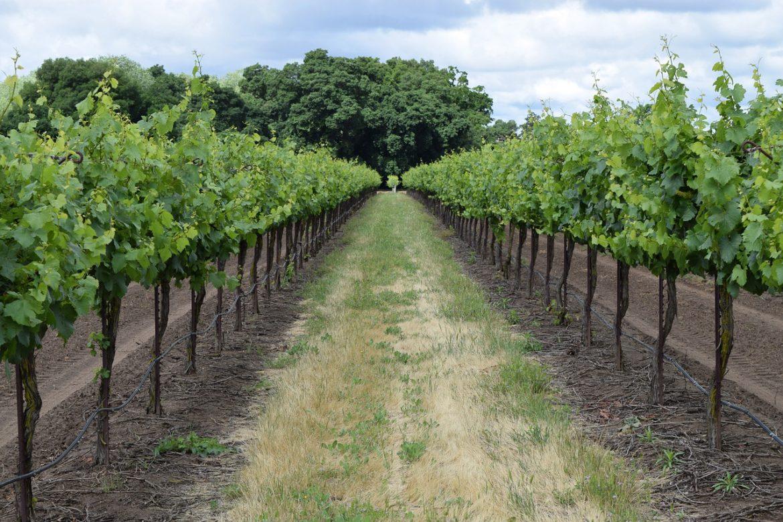 Argentina e Chile lançam a mais longa rota de vinho do mundo